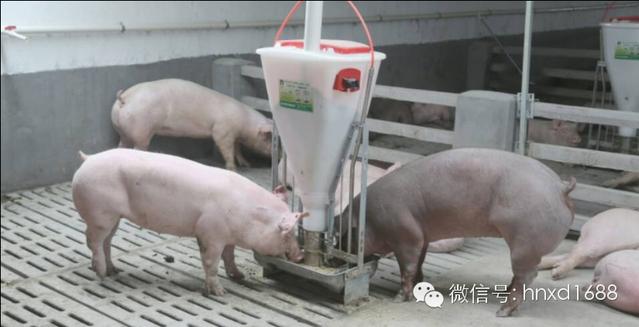 长43米宽5米求猪厂设计图